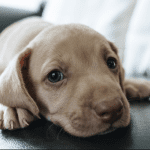 Am I Crazy to Get a Dog For My Kids?